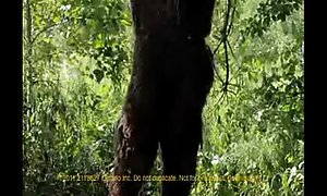 Sweet Wariness &_ the Incident of Bigfoot (2011)
